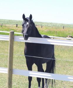 Horse near fence in field